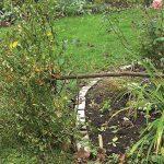 11609 Укрытие на зиму штамбовой розы: личный опыт Юлии Тадеуш
