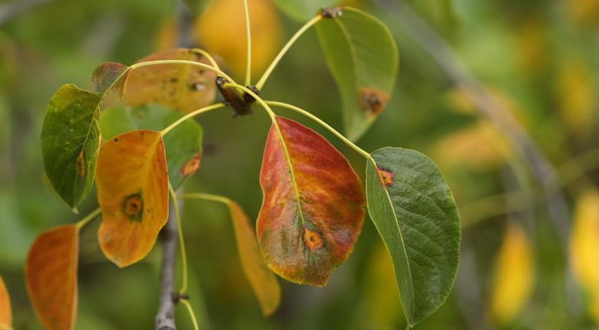 11701 Когда и чем обрабатывать деревья осенью по Лунному календарю 2021 года