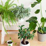 11677 Комнатные растения для северных окон: полный список