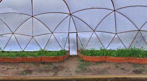 11729 Лучшие сидераты для посева в теплицу осенью и под зиму