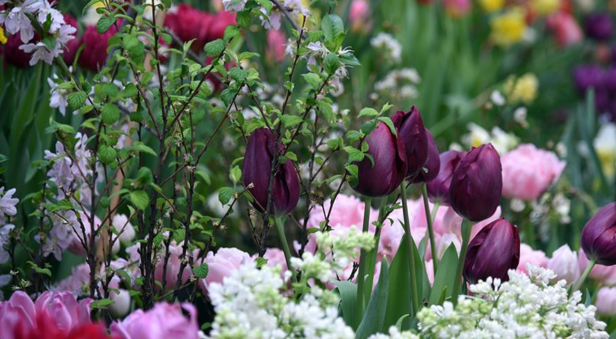 11741 Миллиарды на тюльпаны: в Москве не поскупились