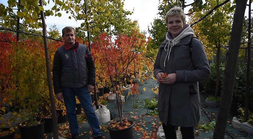 11698 Осенние посадки деревьев и кустарников: что сажать, а что отправить в прикоп?