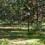 11674 Самые красивые сады России: У леса на опушке