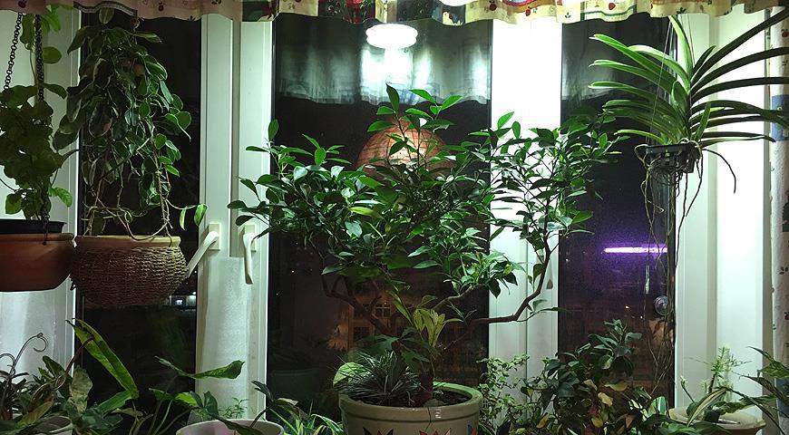 11744 Зимняя досветка комнатных растений и рассады: как правильно выбрать фитолампу?